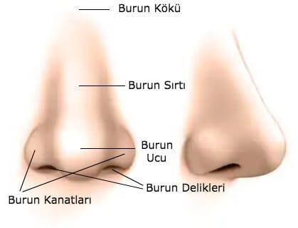 burun dış anatomisi