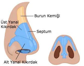 Burun iç anatomisi